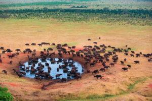 Wildebeest water hole Tanzania Safari - Proud African Safaris