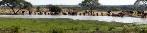 Elephant herd, Tarangire - Tanzania Safari - Proud African Safaris