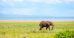 Bull elephant at Lake Manyara - Tanzania Safari - Proud African Safaris