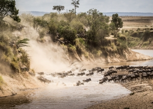Wildebeest migration river crossing Tanzania Safari - Proud African Safaris