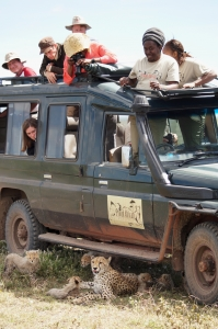 Tanzania Safari vehicle with leapords - Proud African Safaris