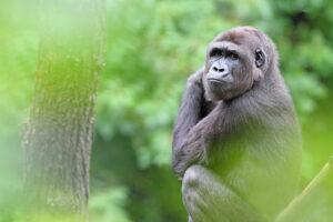 See Rwanda gorillas - Tanzania Safari - Proud African Safaris