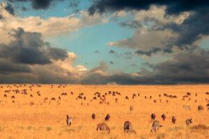 Protecting the serengeti