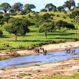 Damming the Serengeti