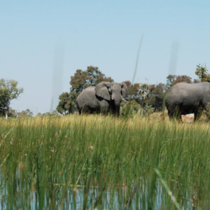 threat to african ecosystems