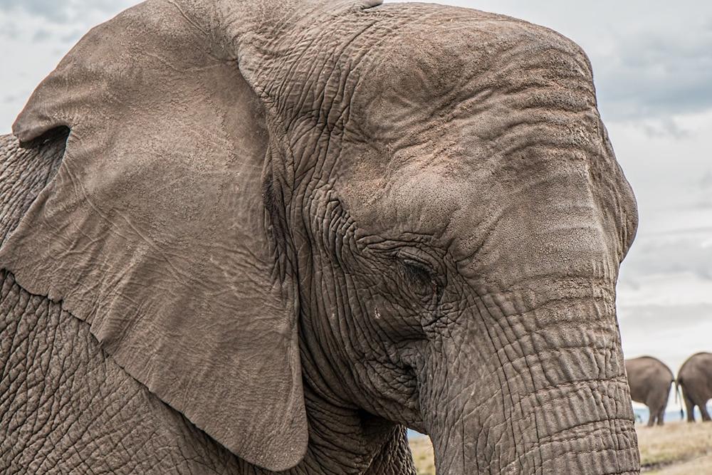 Botswana conservation