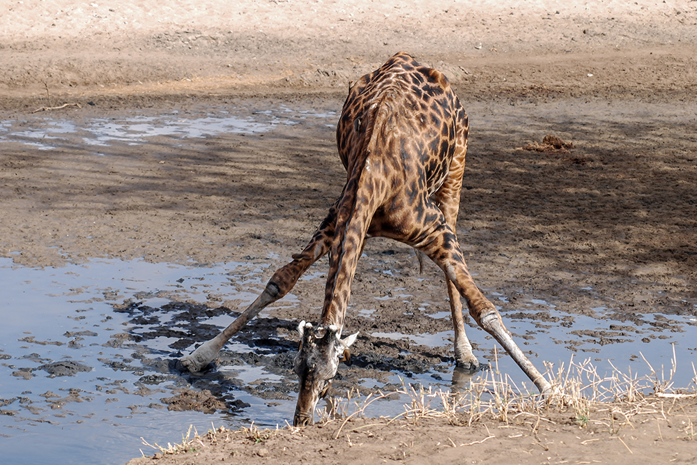 climate change in the serengeti